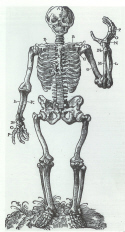 Skeleton in Osteotome